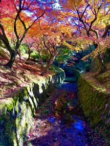 スタッフの休日 京都の紅葉